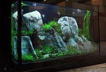 Aquarium / Aquarium / by Tischlerei Notbusch & Novakovic