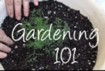 My Garden  / EVERYTHING YOU NEED TO KNOW ABOUT GARDENING  / by Jesse Waltman
