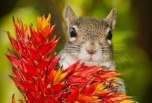 Nutty For Squirrels!!! / by Ginny Ellis