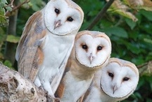 Be A Wise Owl / by Ginny Ellis