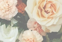 The Botanist & flowers / by Skye Swimwear