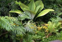 Tropical Gardens / by Steve
