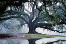 South Louisiana / by Mary Wilkinson