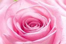 ٠•●♥  Rose Fleurs ٠•●♥ / ~--  l'un des plus beaux fleurs --~ NO RULES.NO BARRIERS. PIN ALL YOU WANT. PS-ㄒɧɛrɛ arɛ ℓot oʄ CRAZY pɛopℓɛ ɧɛrɛ,wɧO ßℓock pɛopℓɛ ʄor rɛ-pıɳɳiɳց. I ɳɛvɛr ßℓock aɳყ of ყou for rɛ-pıɳɳiɳց.I'ɱ ɳoƗ Visit my Tumblr : http://awesomeime.tumblr.com/ Visit my Blog : http://awesomeime.blogspot.com/ / by Ime San