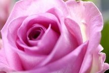 Rosas Increibles / by Lucia Valverde Martin