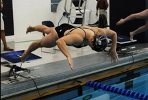 Swimming and Diving / by Zippy