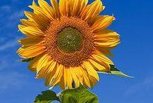 Gardening / by SIBHS