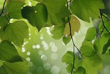 Shades of Green / by Francisca Karsono