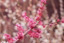 Shades of Pink & Brown / by Francisca Karsono