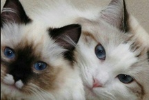 More little kittys / by noreen scully