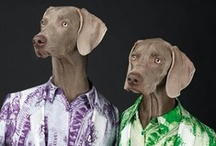 Fashionable Dogs! / And who hasn't dressed their dogs up now and then? / by noreen scully