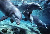Nature: Waterworld / Animals under and above water / by Gabriela Bartlett