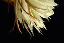 Flower Photos / by Carrie Garrott