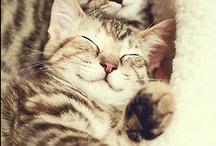 Gatos <3 / by Camila Soares