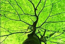 Chartreuse&Green&Lime / by Erja Lindholm