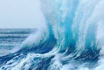 Oceans, Seas, and Shores / Our amazing oceans + the abundant array of life supported by them. / by Heal the Bay