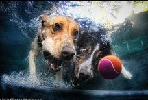 We <3 Dogs / Some dogs seem to love water even more than we do! Did you know that the Heal The Bay offices are dog-friendly?  / by Heal the Bay