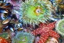 Tide Pools / Tide pools are rocky pools on the sea shore which are filled with seawater at low tide. Many tide pools are habitats of especially adaptable animals.  / by Heal the Bay