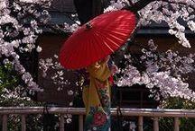 Japan / by honeyjr