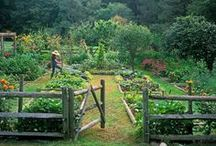 Gardening / by Natalie Gould