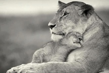 it's a mother &child reunion  / by dawna gray