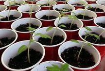 Fans of SeedsNow! / Photos that customers have submitted showing everything they've grown with SeedsNow.com Seeds!  / by SeedsNow.com