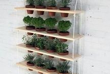 Container Gardening / by SeedsNow.com