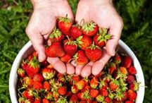 Strawberries / Everything you need to know about growing strawberries!  / by SeedsNow.com