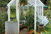 Greenhouses / by SeedsNow.com