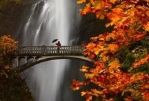 Beautiful Pics / by Sandra Custer