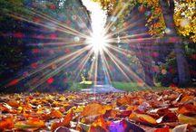 Fall / by Paula R Bailey