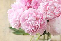 Flores / by dekata