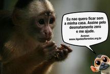 Greenpeace / Liga das Florestas / by Thays Galhardo