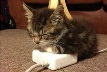 CATS CATS CATS / by Briana Jones