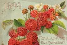 DIY Vintage Garden / Gorgeous vintage garden ephemera, catalogues, seed packages, guides and more!  Everything ROSE on separate board: http://pinterest.com/kewlme/diy-vintage-rose-garden/ / by Gunnvor Karita (((wingsofwhimsy)))