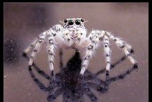 Spider Beauty~ / No escaping spiders~ / by Sheila Barrett