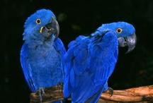 Birds & such / by Sue Harrington