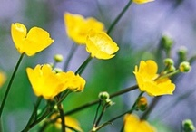 Flowers; yellow / by Easter Bell