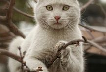 Cats / Cats and more cats / by Lucille Wenzel