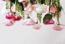 Flowers / by Morgan Botha