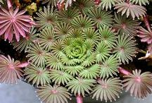 great plants / great plants that I find intriguing.... / by Jan Johnsen