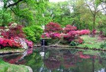 Flowers ~ Gardens ~ Outdoor Spaces / by Susan Herring