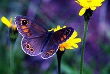 Butterflies and Moths / by Beauty Everywhere