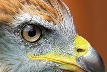 HAWKS...EAGLES...OWLS / by Dee Matthews