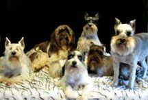 When just one won't do! / If you have more than one dog, or wish you did, then you will totally love this board! I understand some of these photo's may be litters, however it is not my intention to promote breeding. I work in a shelter, I promote spay/neuter!  / by DJ Dogirl
