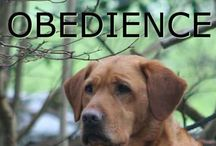 Puppy Training/Health(Tips) / by Madis_Jordynne