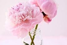 Pretty in Pink / by Coquette + Dove | The Coquette Bride