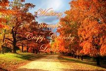 Autumn's Glory / Various photos of the gorgeous colors of Autumn around the world. / by Sherry Coulter
