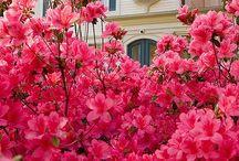 Flowers / by Alvarosi