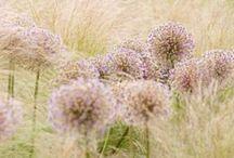 Garden natural / by Susanne Winkle